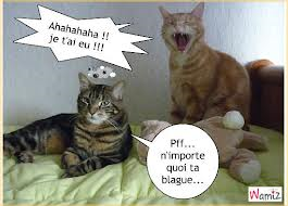 animaux drole